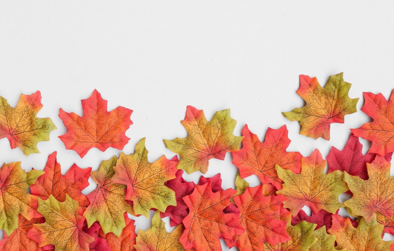 Photo wallpaper autumn, leaves, background, colorful, maple, background, autumn, leaves, autumn, maple
