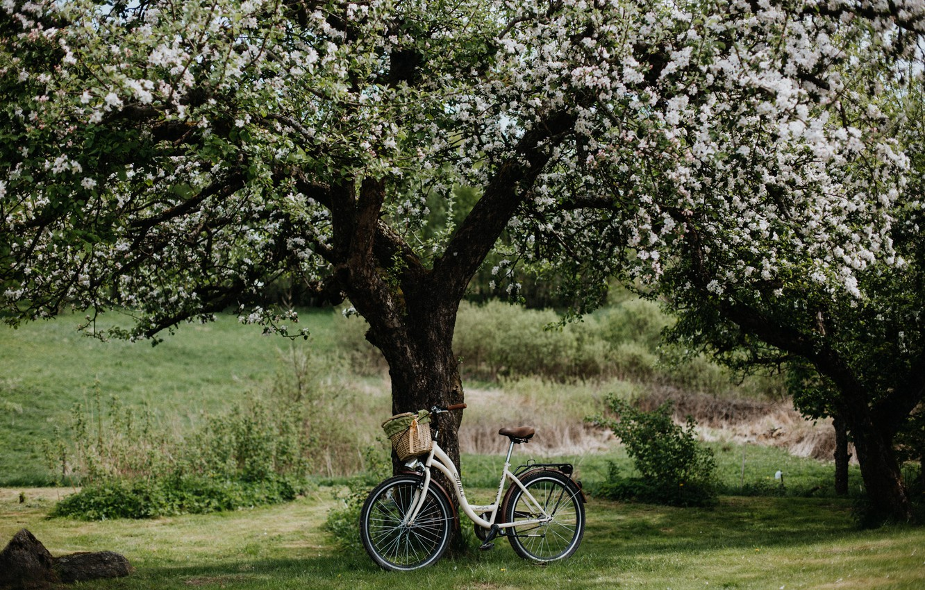 Wallpaper Wallpaper Bicycle Field Nature Flowers Landscapes Tree Bloom Moods Apple Tree 4k Ultra Hd Background Images For Desktop Section Nastroeniya Download
