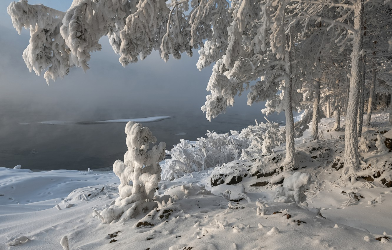 Photo wallpaper winter, snow, trees, landscape, branches, nature, river, shore, frost, Enisey