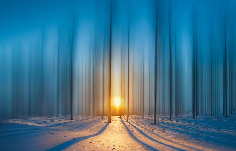 Photo wallpaper forest, rays, snow, The sun, forest, snow, rays, sun, royhoo
