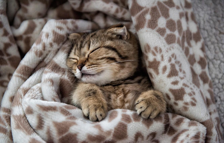 Photo wallpaper legs, muzzle, plaid, kitty, sleep, Edgars Gerskovics