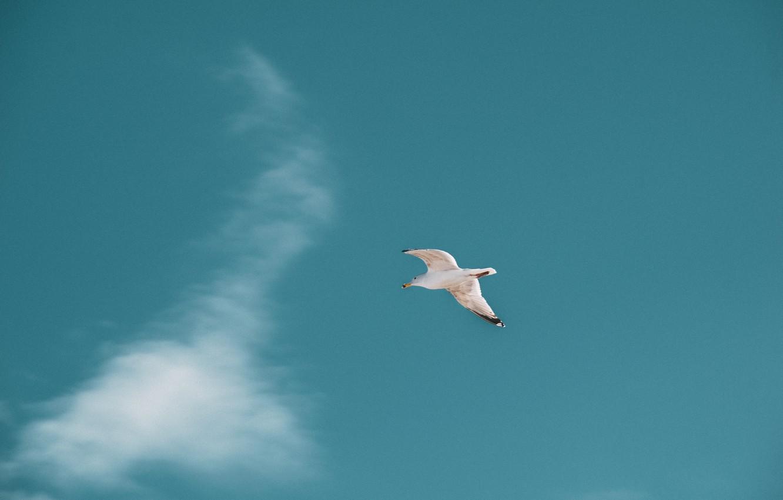 Photo wallpaper Blue Sky, Sky, Bird, Fly, Fly Bird
