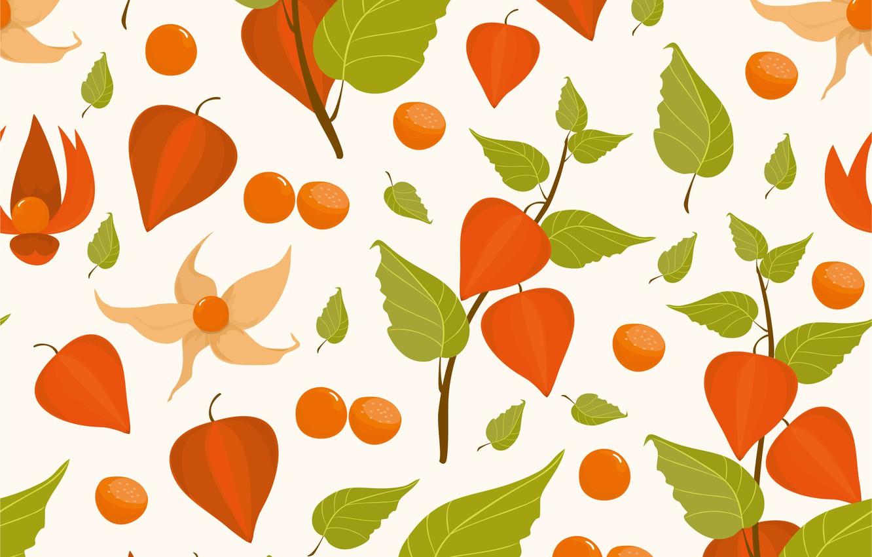 Photo wallpaper texture, white background, Pattern, physalis