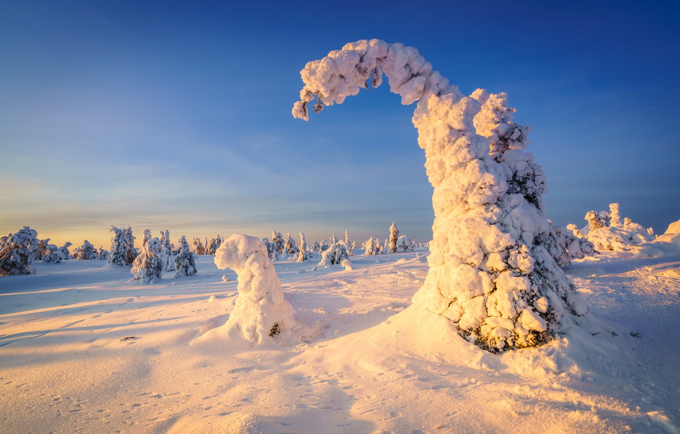 Photo wallpaper winter, frost, forest, the sky, light, snow, trees, nature, blue, ate, winter, Christmas trees, snowy