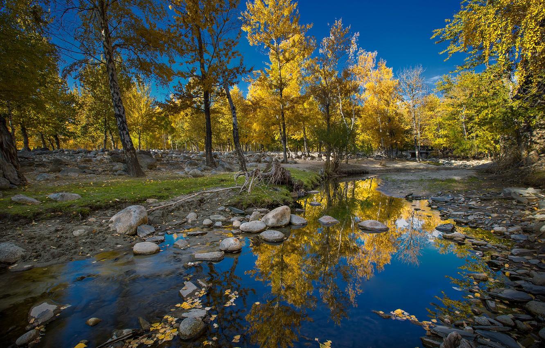 Photo wallpaper autumn, the sky, trees, stream, stones