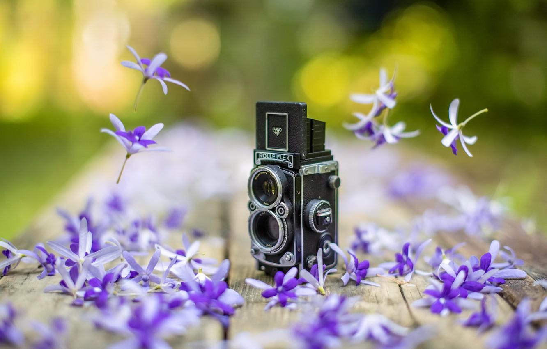 Photo wallpaper flowers, background, camera