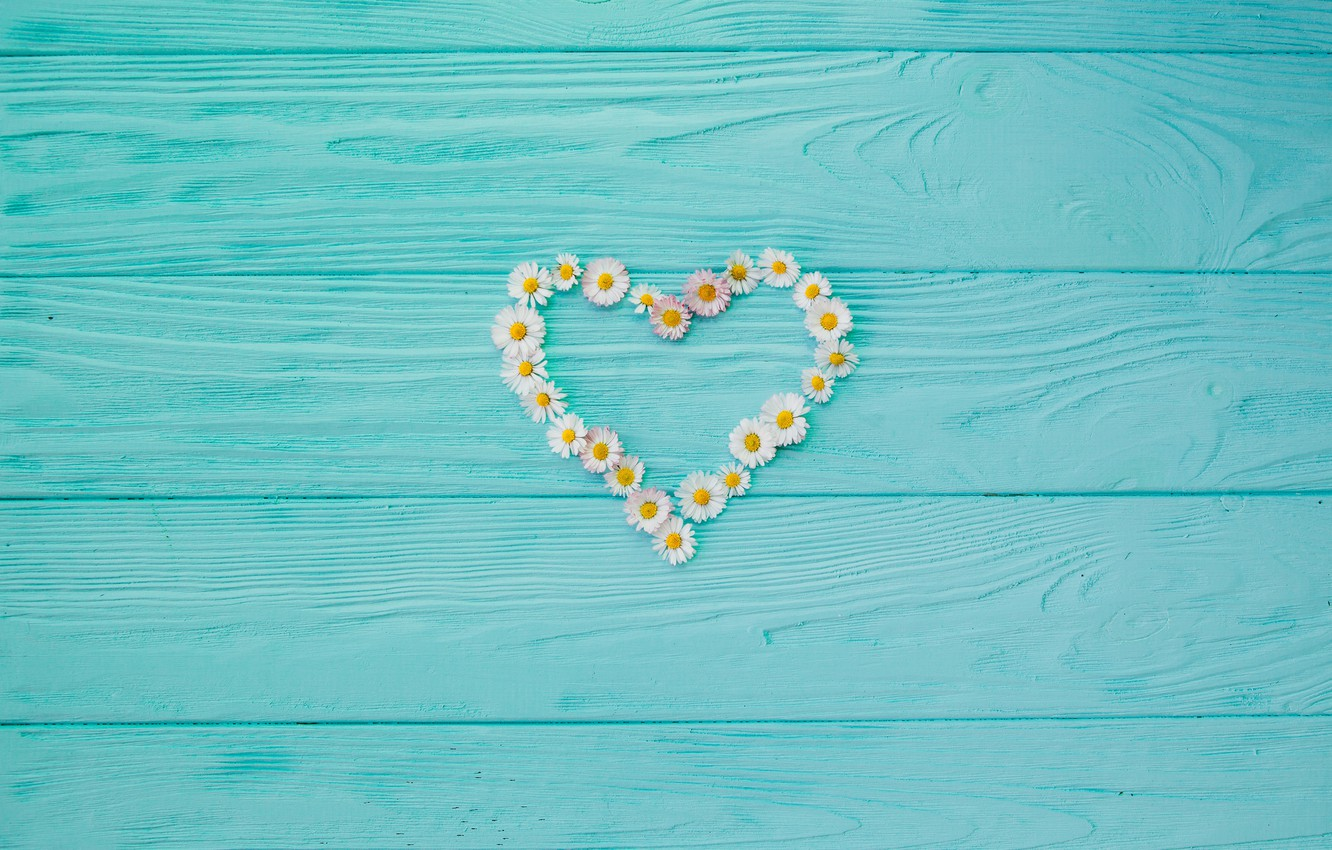 Photo wallpaper background, tree, Board, chamomile, love, vintage, heart, wood, texture, blue, background, camomile