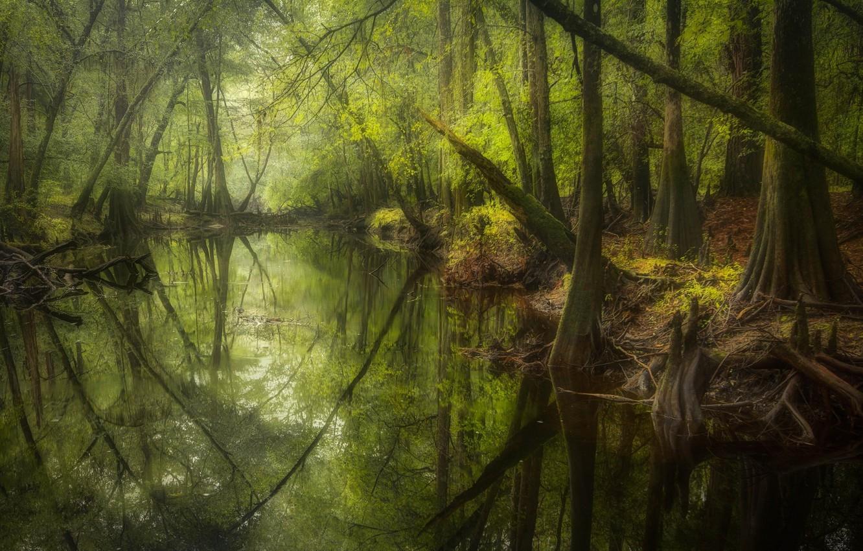 Photo wallpaper forest, landscape, nature, river, beauty