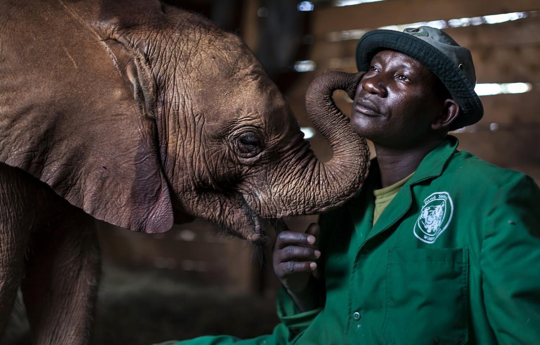 Photo wallpaper people, elephant, communication