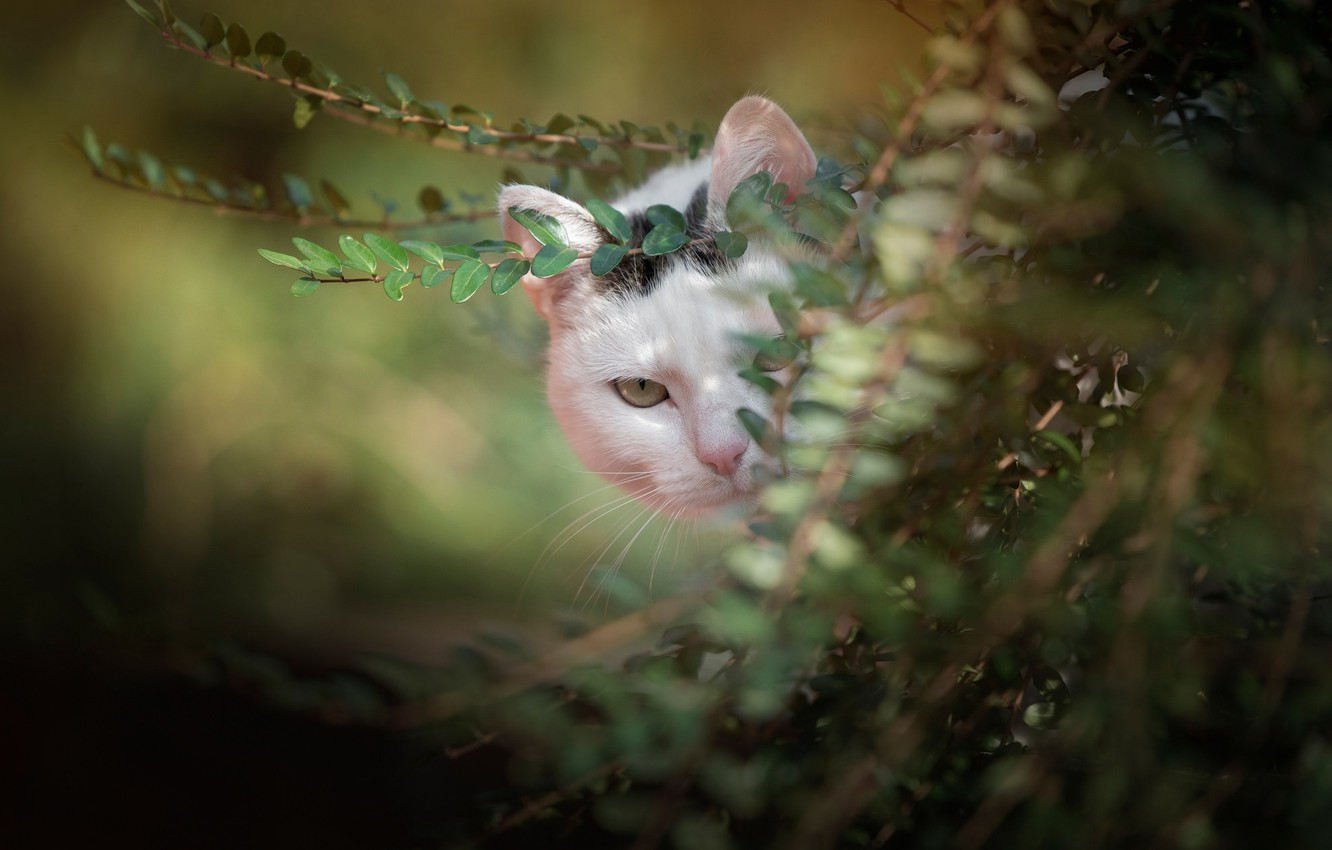 Photo wallpaper greens, cat, look, branches, muzzle, bokeh, cat