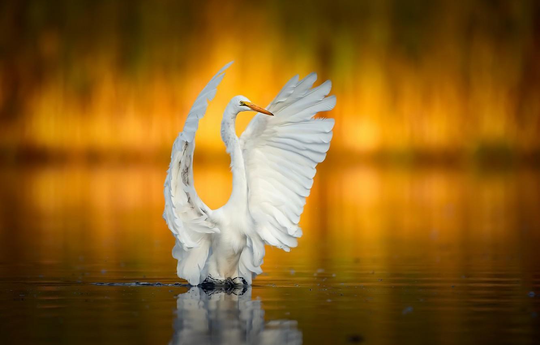 Photo wallpaper nature, bird, Dont shoot, I surrender