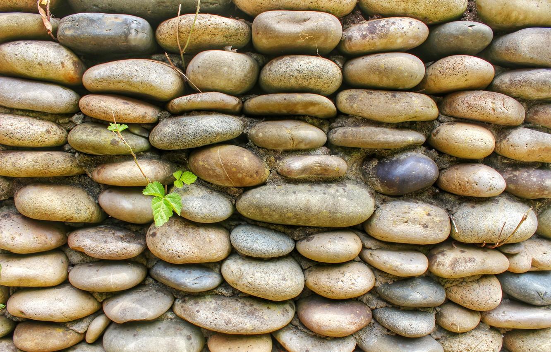Photo wallpaper grey, leaf, Stone