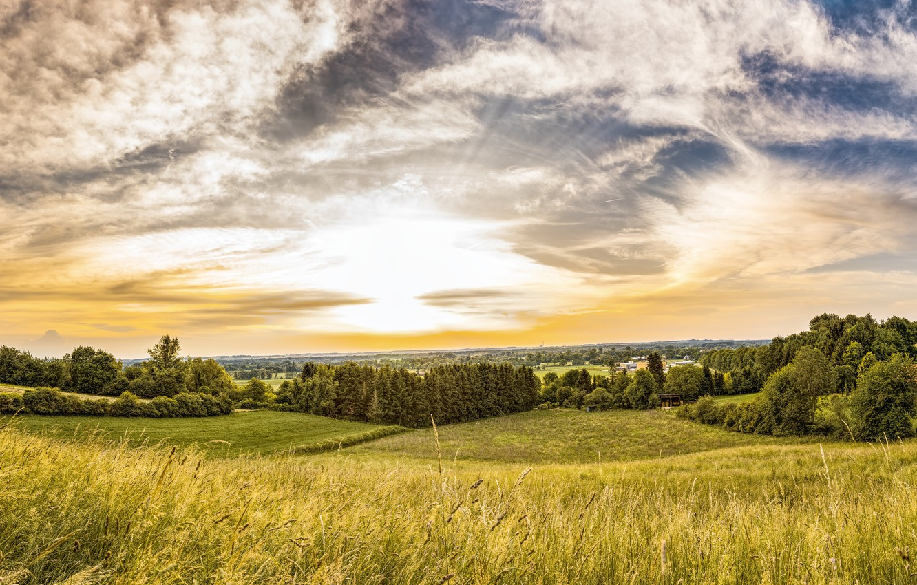 Photo wallpaper field, summer, the sky, grass, the sun, clouds, light, trees, landscape, bright, comfort, hills, view, ...