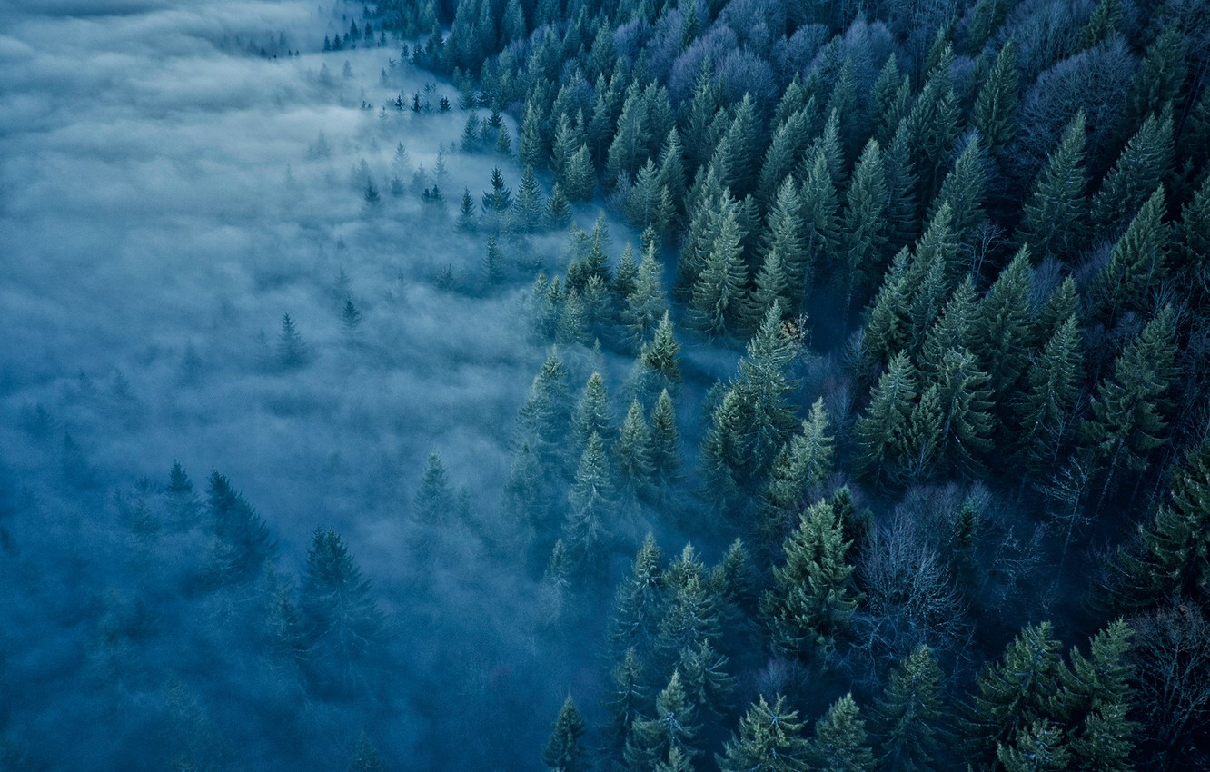 Photo wallpaper forest, trees, fog, France, France, Jura Mountains, The Jura Mountains, Mont d'Or
