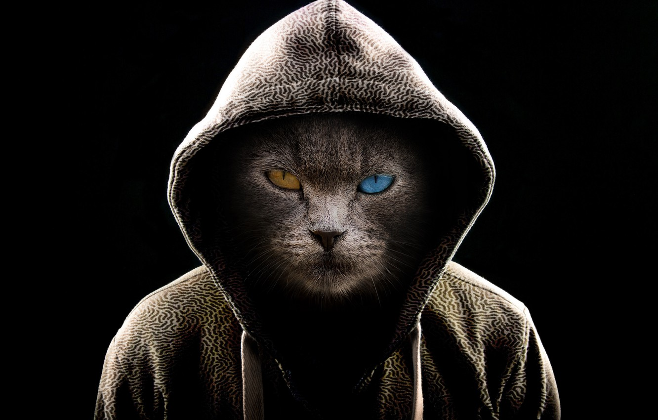 Wallpaper Dark Fantasy Cat Serious Cats Digital Art Brown Eye Hood Miscellaneous Muzzle Fiction Blue Eye Cat Face Heterochromia 4k Ultra Hd Background Images For Desktop Section Raznoe Download