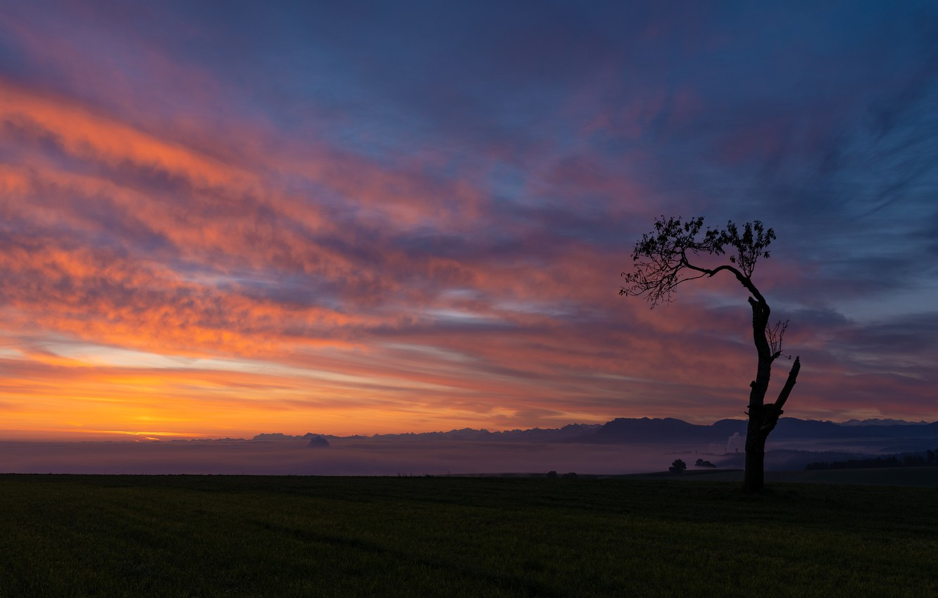 Photo wallpaper field, the sky, clouds, sunset, mountains, tree, silhouette, space, twilight, alone