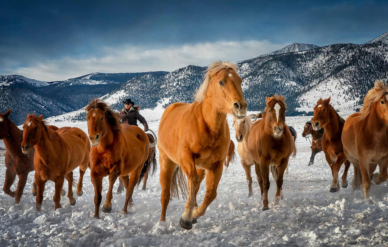 Photo wallpaper winter, mountains, horses, horse, Colorado, the herd