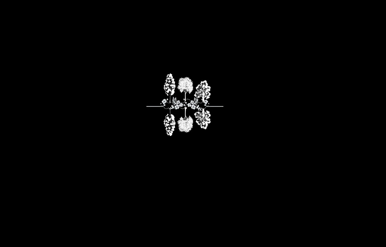 Photo wallpaper minimalism, black background, Trees, simple background, contour lines