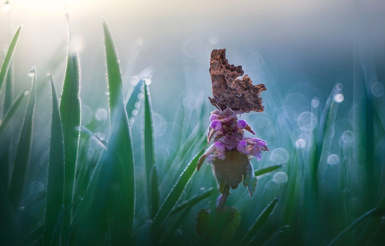 Photo wallpaper flower, grass, nature, butterfly, bokeh, Roberto Aldrovandi
