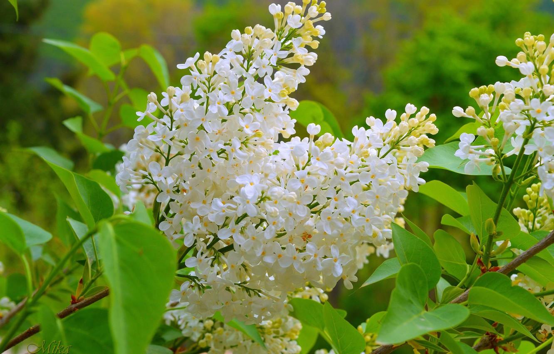 Photo wallpaper Spring, Spring, Flowering, Flowering