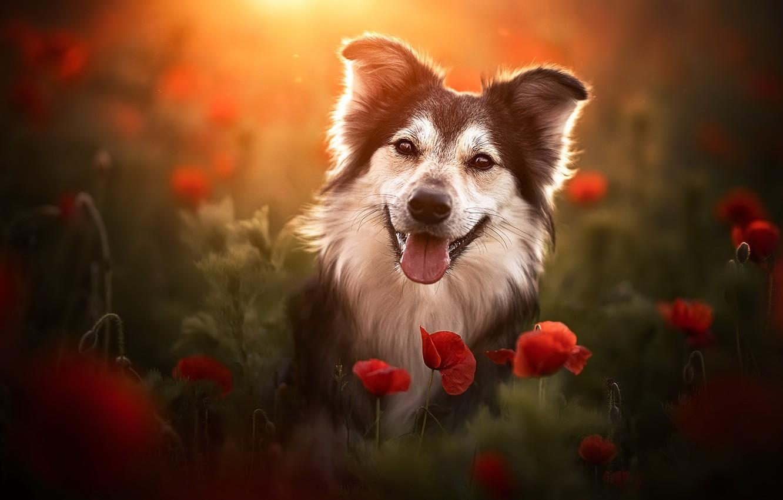 Photo wallpaper summer, each, Maki, dog