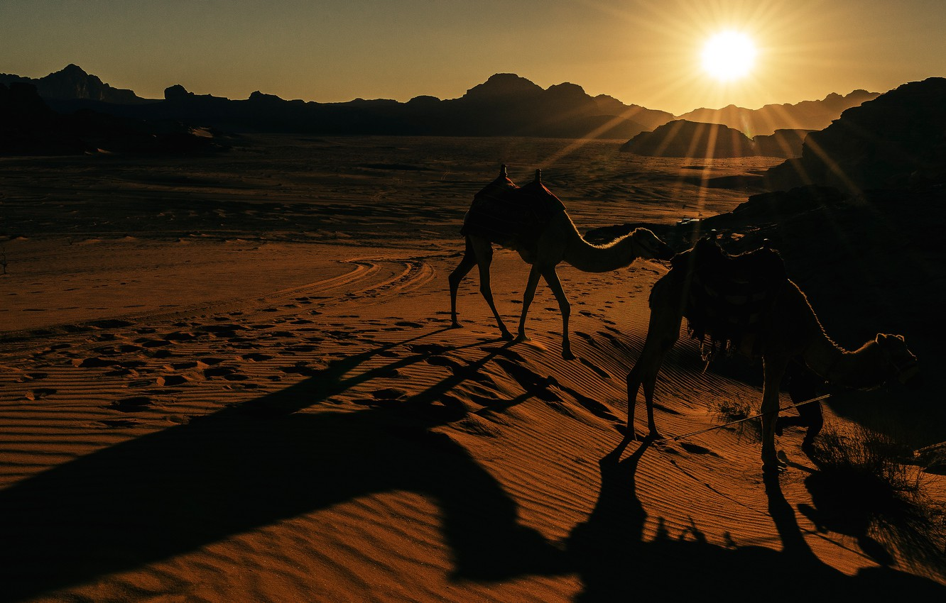 Photo wallpaper the sun, light, sunset, nature, hills, desert, the evening, camel, shadows, Sands, camels