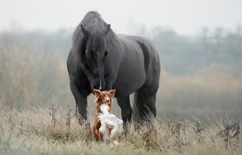 Photo wallpaper grass, horse, dog, friends, Svetlana Pisareva