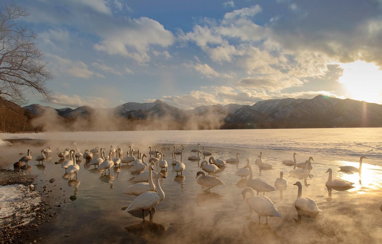 Photo wallpaper winter, the sky, the sun, clouds, light, snow, mountains, birds, nature, fog, shore, tops, pack, …