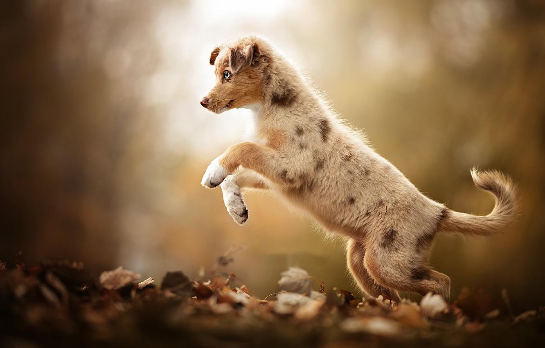 Photo wallpaper autumn, each, dog