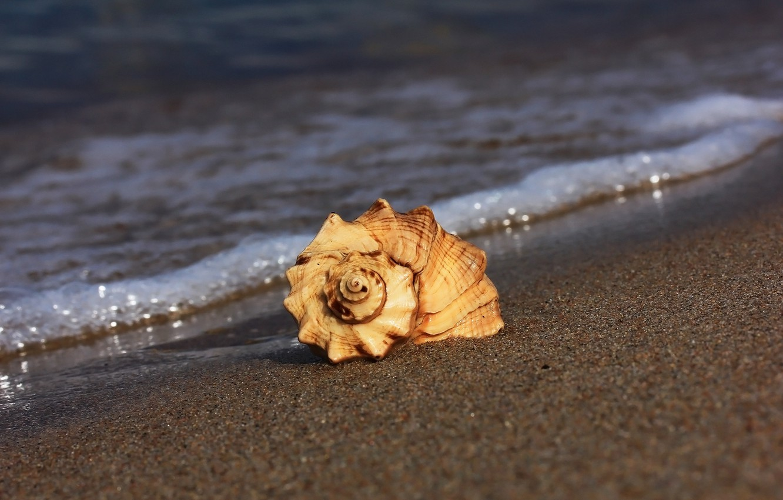 Photo wallpaper sand, beach, shell