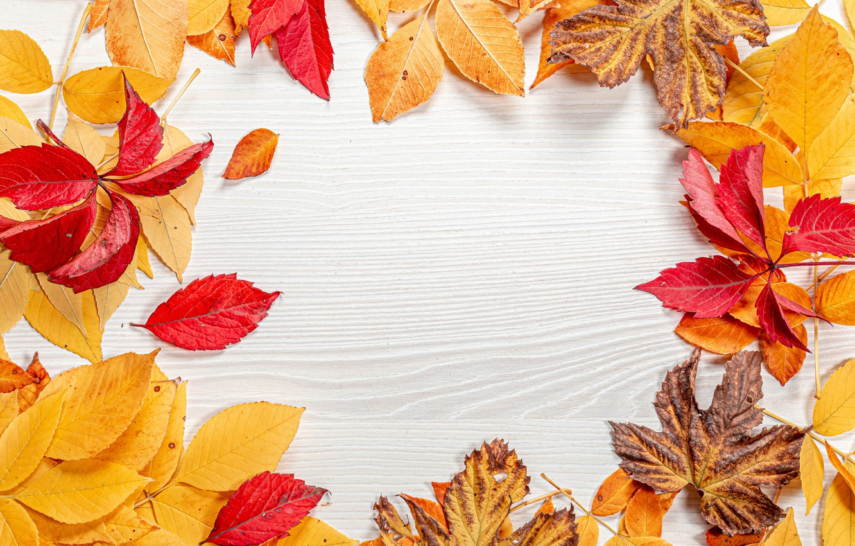 Photo wallpaper autumn, leaves, postcard, template, blank