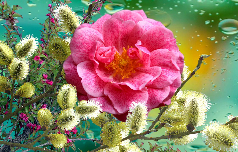 Photo wallpaper Flowers, ROSE, Verba, Spring festival