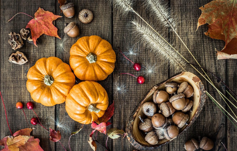 Photo wallpaper autumn, leaves, pumpkin, acorns