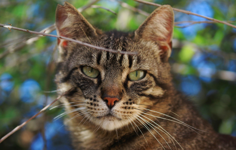 Photo wallpaper cat, cat, look, branches, muzzle