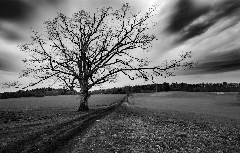 Photo wallpaper road, field, tree
