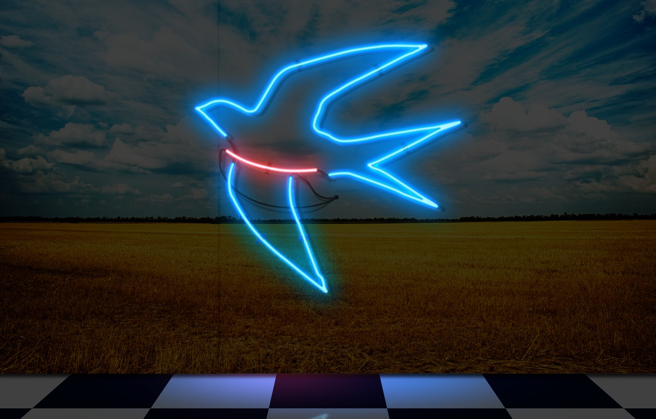Photo wallpaper neon, museum, swallow, neon sign, my works, neom, art gallery