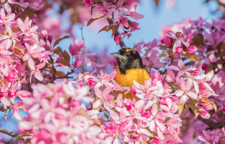 Photo wallpaper light, flowers, branches, bird, spring, pink, flowering, yellow
