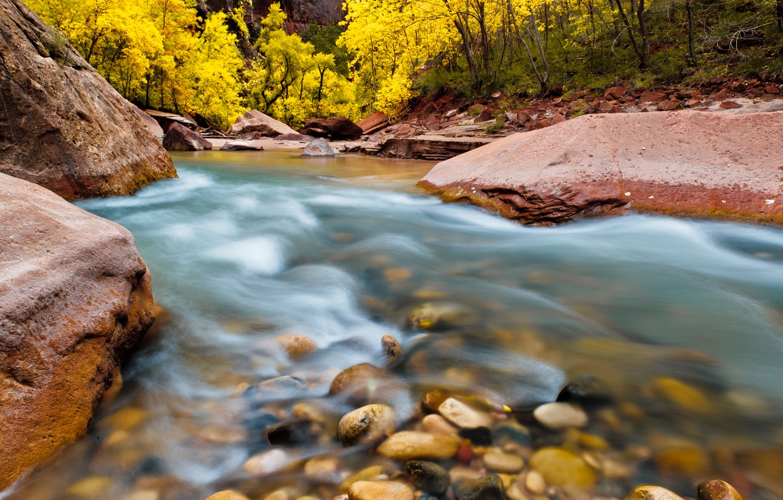 Photo wallpaper trees, nature, river, stones, rocks, Utah, USA, National Park, National Park, Zion, Zion
