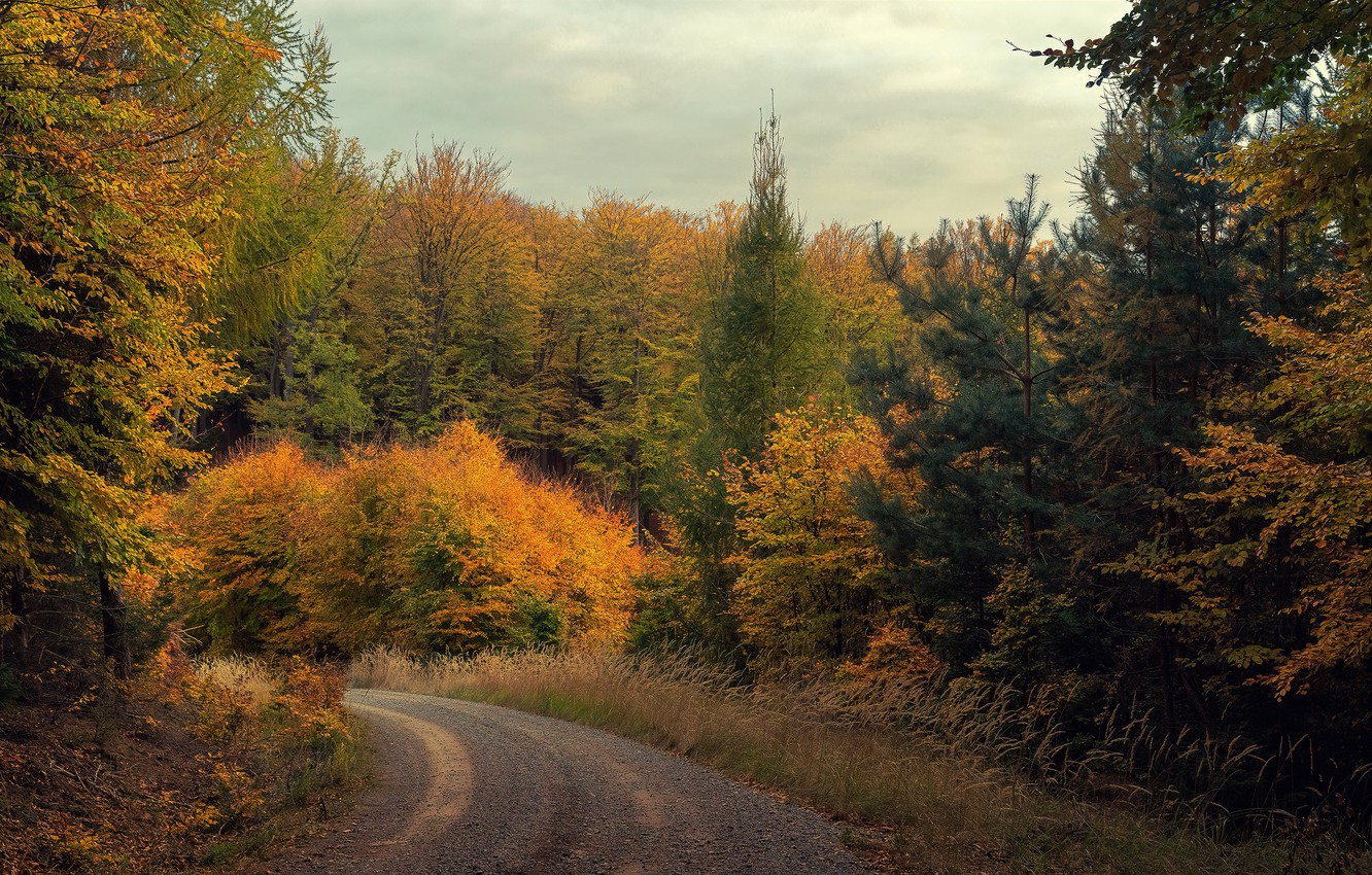 Photo wallpaper road, autumn, forest, the sky, trees, branch, turn, ate, the colors of autumn, shrubs, yellow …