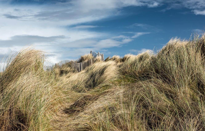 Photo wallpaper beach, summer, the sky, dunes