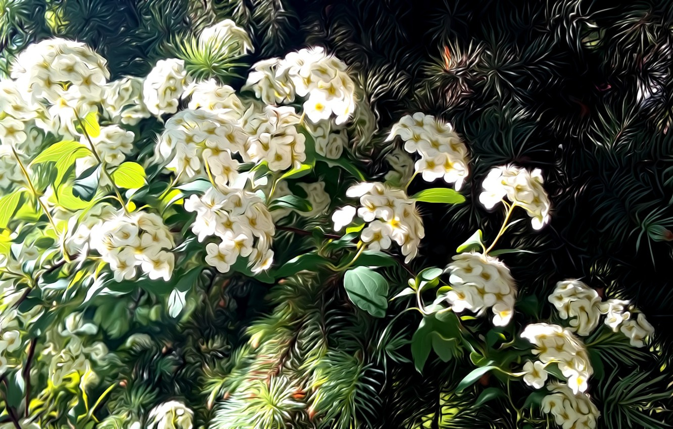 Photo wallpaper greens, leaves, rendering, spring, needles, picture, white flowers, sunlight, flowering branch, the spring bloom