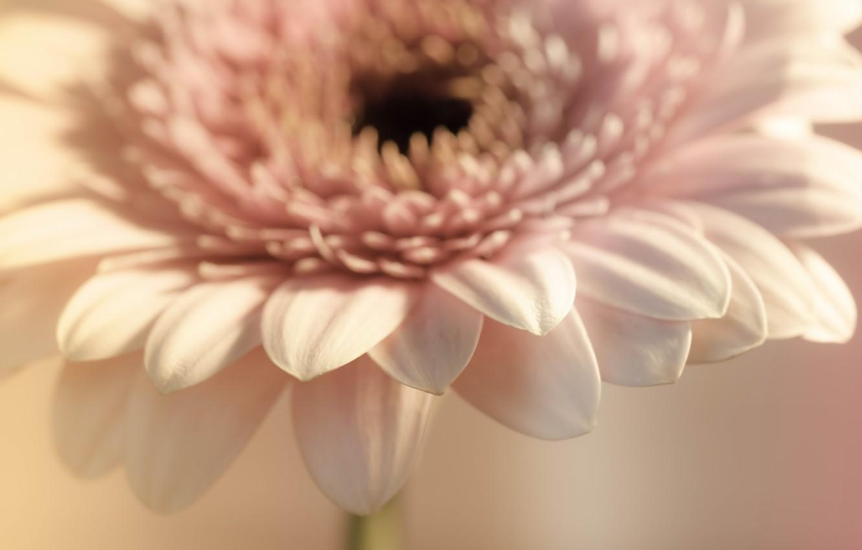 Photo wallpaper flower, macro, background