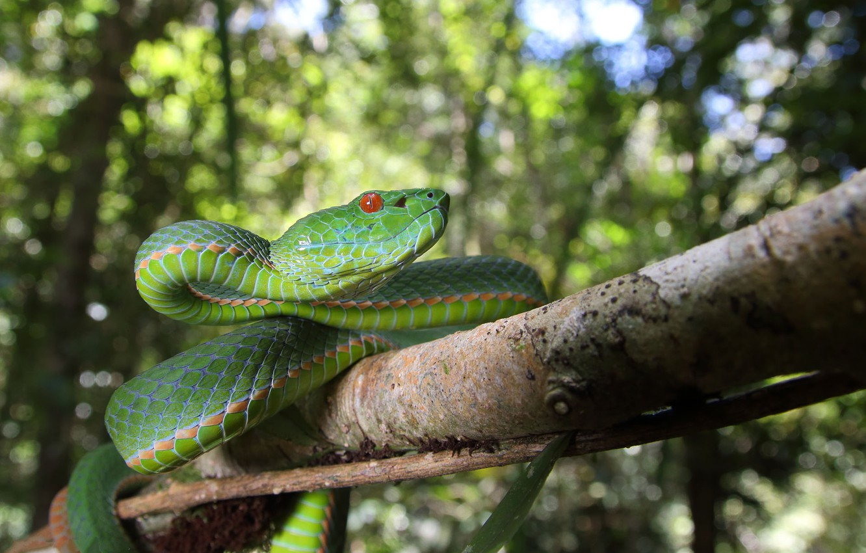 Photo wallpaper branch, bokeh, green snake