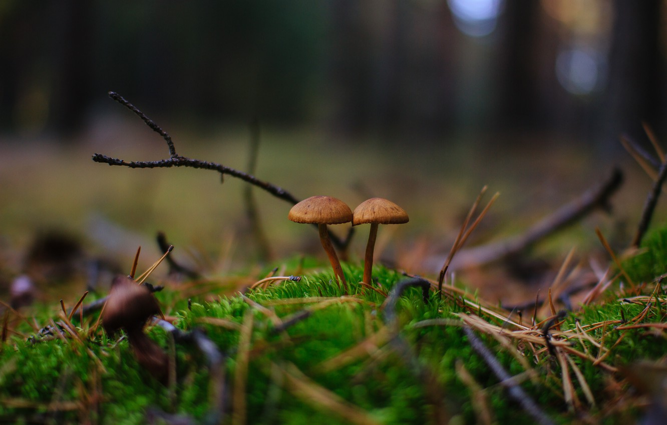 Photo wallpaper autumn, forest, nature, mushrooms, a couple