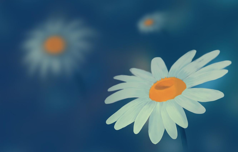 Photo wallpaper figure, chamomile, wildflowers, chamomile field