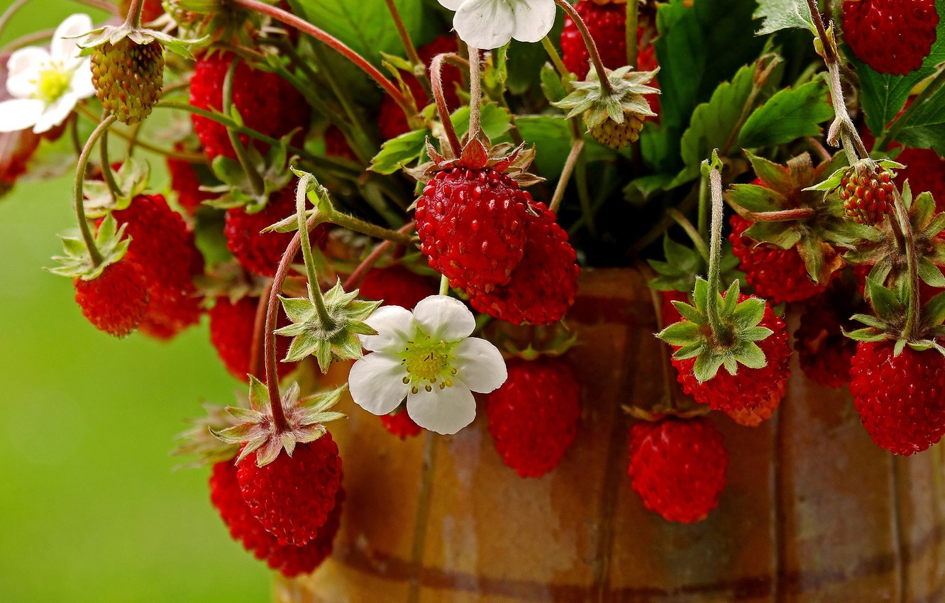 Photo wallpaper summer, berries, strawberries, red, pot, flowers, a bunch, ripe