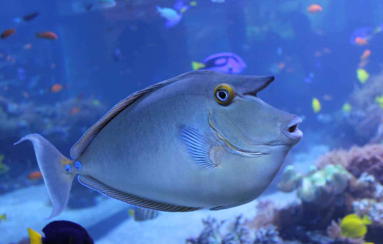 Wallpaper Sea Macro The Ocean Fish Images For Desktop