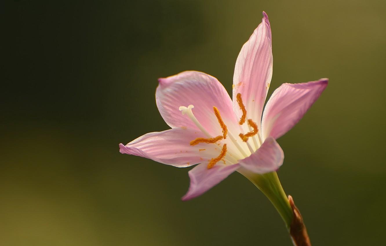Photo wallpaper flower, nature green style, bokeh background