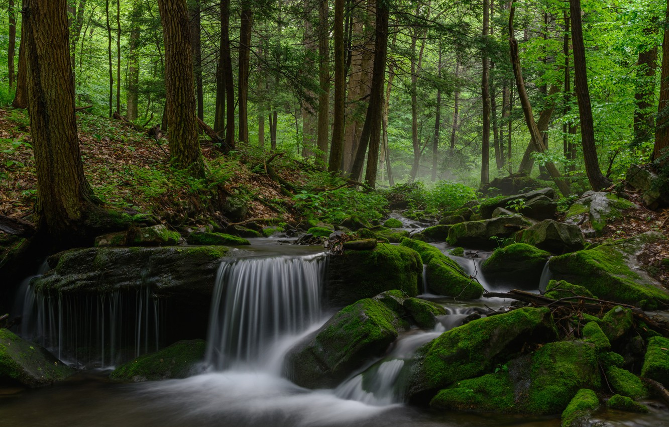 Photo wallpaper forest, trees, river, moss