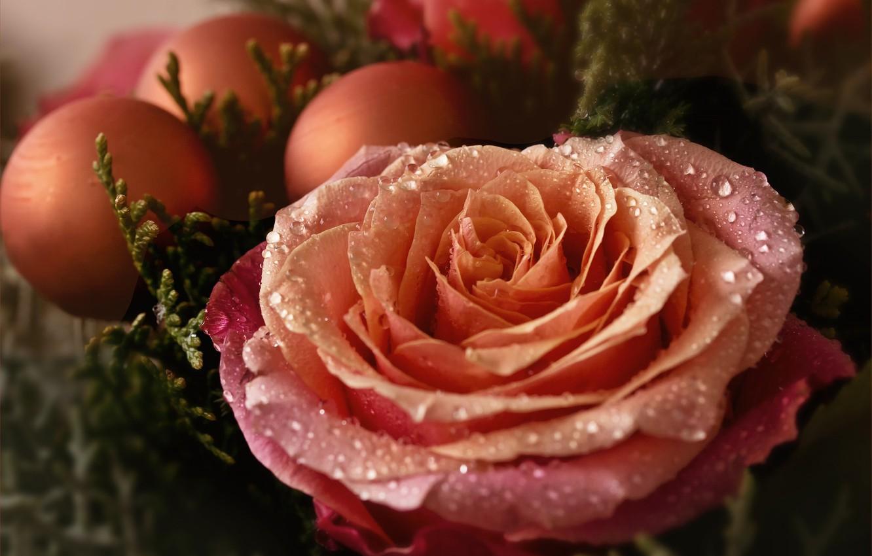 Photo wallpaper drops, macro, rose